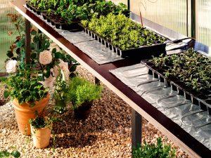 Gewächshäuser Pflanzenzucht