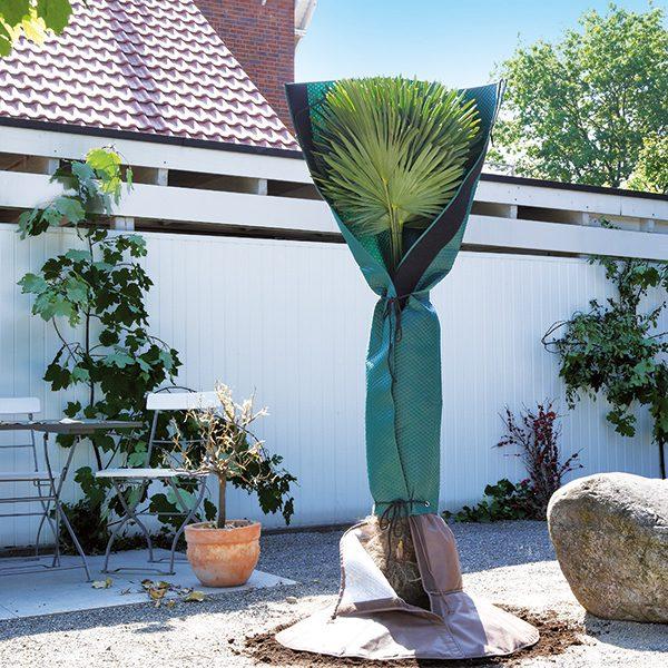 Gewächshaus Zubehör - Palmenschutz1