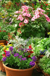 Flowers in pots in the greenhouse