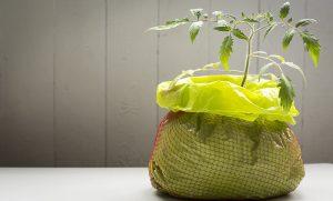 Pflanze-wächst-aus-Blumenerdesack