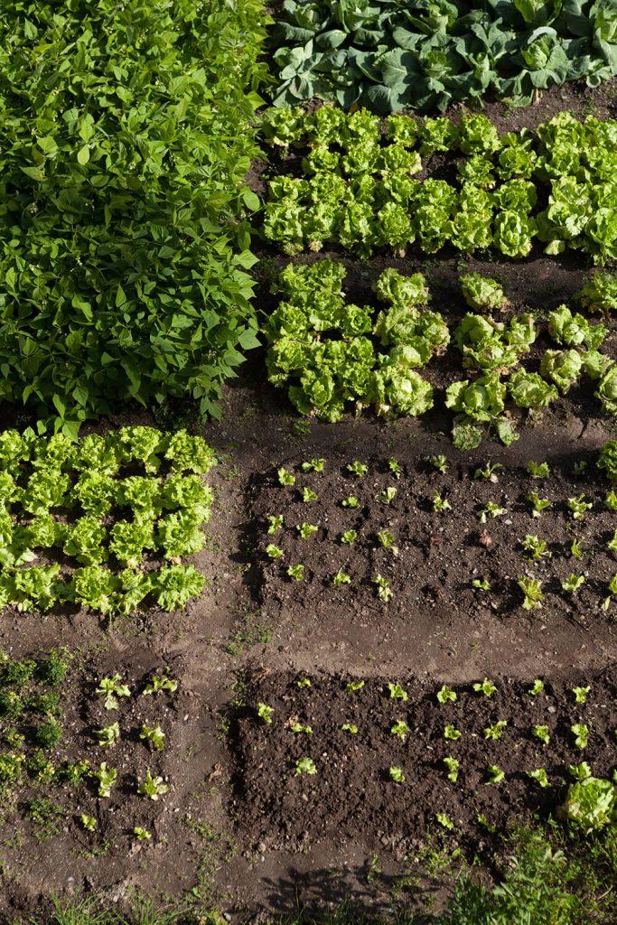 Beete planen und Saatgut besorgen