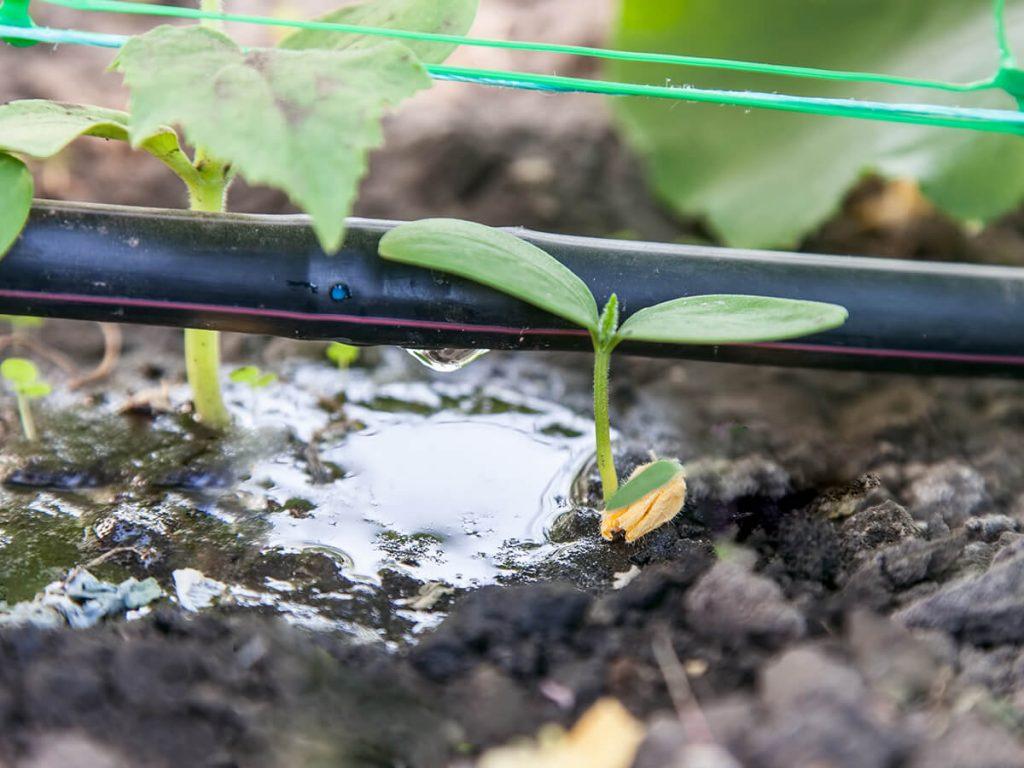 Bewässerung mit Schlauch