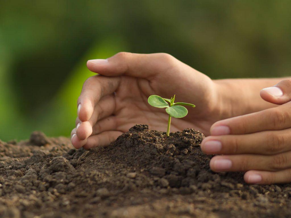 Pflanzen absichern