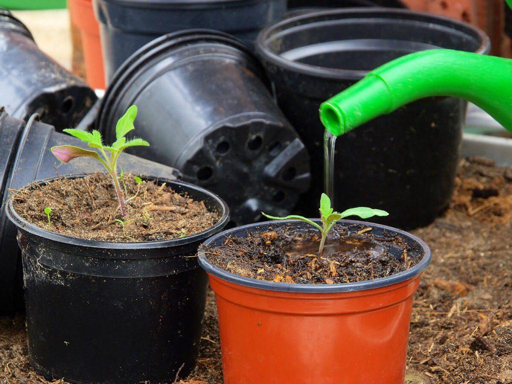 Pflanzen an der Wurzel giessen