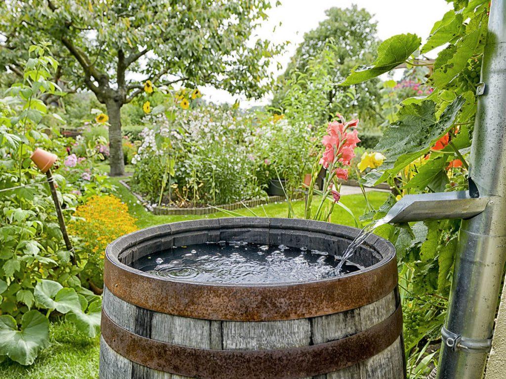 Wasser zum Gießen aus der Regentonne