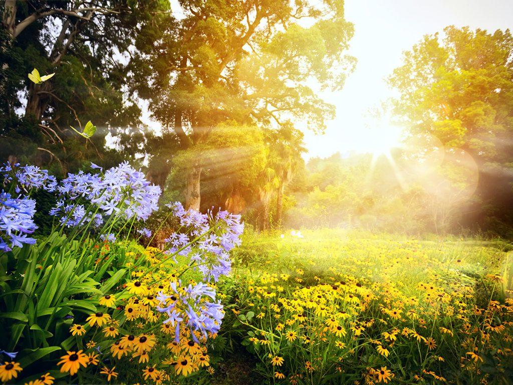 Sonnenseite Garten