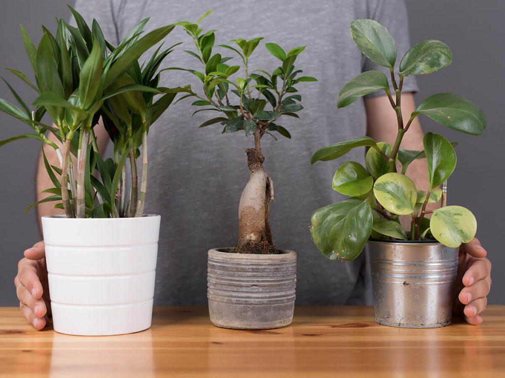 auswahl-pflanzen
