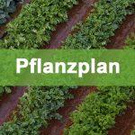 pflanzplan-thumb