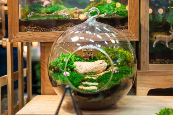 Glaskugel als Mini-Gewächshaus