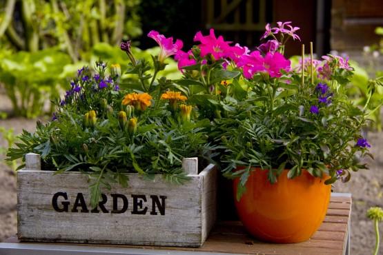 Blumen in Töpfen